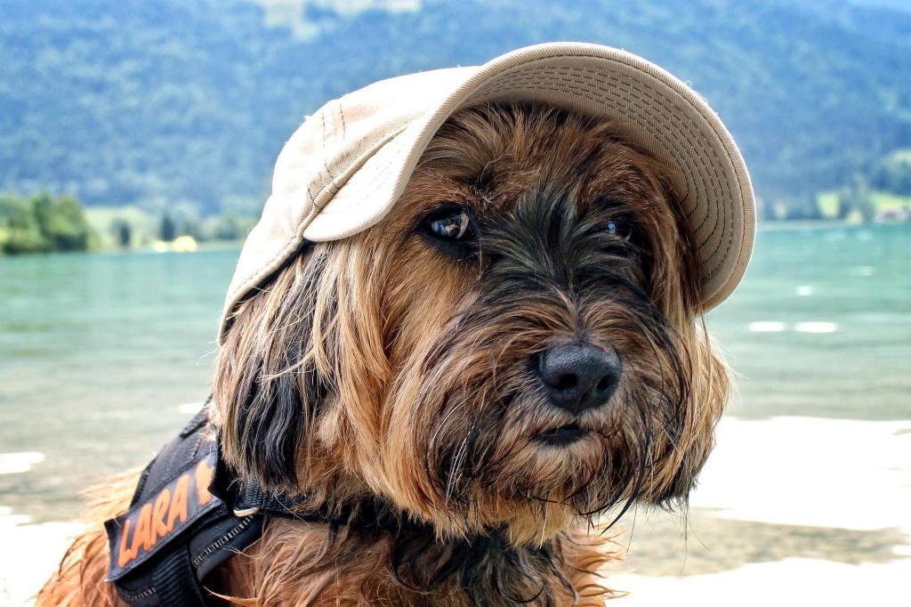 Hotel per cani Riva del Garda